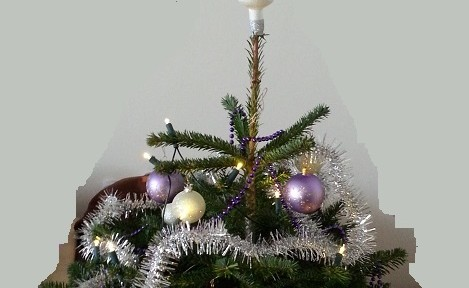Lebender Christbaum