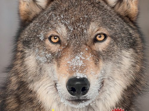 Rezension Kindersachbuch | Entdecke die Wölfe